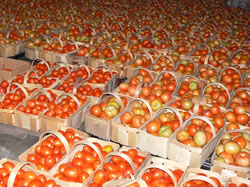 Lot's of Tomatoes
